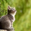 Хозяин зашел в кухню, обнаружил кошку на потолке и насмешил всех (ВИДЕО)