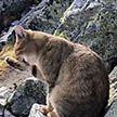 Альпинист обнаружил на вершине горы домашнего кота
