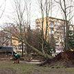 Упавшие деревья, поврежденные авто и отключенное электричество: в Беларуси продолжают устранять последствия непогоды