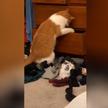 «Он так смешно шевелит лапами»: застрявший в шкафу кот развеселил Сеть