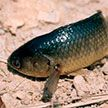 В Китае десятки рыб по суше отправились на поиски нового дома (Видео)