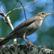 Премьера фильма о перелетных птицах Беларуси прошла в Минске