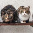 В Барановичах откроют приют для бездомных животных