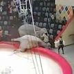 Два слона подрались во время циркового представления и упали за борт манежа