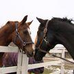 Единственная в Минской области детско-юношеская школа конного спорта открылась после ремонта