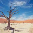 Завораживающе: как выглядит долина окаменевших деревьев в пустыне Намиб (ФОТО)