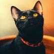 Кот научился кататься на скейтборде и восхитил Сеть