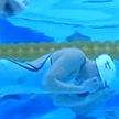 Белорус Илья Шиманович выиграл серебро на ЧЕ по плаванию на короткой воде в Глазго