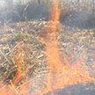 Первые в 2020 году природные пожары зафиксированы в Беларуси в феврале