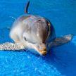 Дельфины не такие добрые, как многие думают! 5 жутких фактов, о которых вы могли не знать