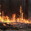 В Чернобыльской зоне отчуждения горят леса: огнем охвачены более 100 гектаров