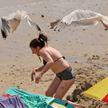 В Британии чайки атакуют отдыхающих на пляже людей