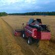 Уборочная-2020: урожайность выше прошлогодней на 25%