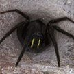 Жуткий гость: из стены в офисе вылез паук со светящимися челюстями