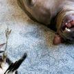 «Это заставило меня расплакаться»: собака спасла сороку и подружилась с ней