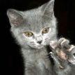 Котам запретили удалять когти в США