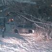 Циклон «Ларс» в Гродно: из-за обильного снегопада деревья и ветки падают на дорогу