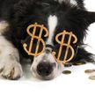 Собаке дали $5, чтобы она перестала лаять, но не все пошло по плану. Посмотрите, что сделал пес – такого никто не ожидал! (ВИДЕО)