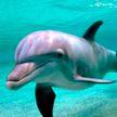 Видеофакт: 132 дельфина выбросились на берег Атлантического океана