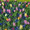 Тюльпаны и гиацинты зацвели на две недели раньше в Ботаническом саду