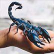Тысячи пауков, скорпионов и других экзотических животных  похищены из музея в Филадельфии