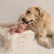 Собака два дня укрывала телом 2-летнего ребёнка, чтобы спасти его от сибирских морозов