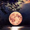 «Цветочная» Луна взойдет над Землей 7 мая