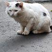 Живодёр из Гродно избил и задушил кота: возбуждено уголовное дело