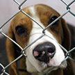 Приют для бездомных животных в Витебске проводит благотворительную акцию