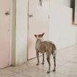 Собака целую неделю ждала умершего хозяина возле работы