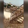 В Индии произошло нашествие пустынной саранчи (ВИДЕО)