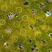 Фотофакт: в парках Сан-Франциско нарисовали круги ради соблюдения дистанции