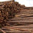 Эффективность реализации древесины хотят повысить в Беларуси