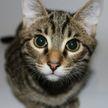 «Бой с тенью»: кот спас хозяйку от змеи (ВИДЕО)