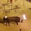 Разъярённый бык начал терзать туриста во время фестиваля в Испании
