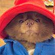 Померанский шпиц выглядит, как мишка Паддингтон