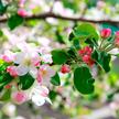 Обработка деревьев и кустарников весной от болезней и вредителей. Как правильно и чем?