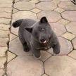 Забавный щенок, похожий на котёнка, стал новым мемом. Пользователи в восторге (ФОТО)