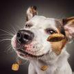 Фотограф поймал потрясающие «выражения лиц»  у собак в тот момент, когда они хватают лакомства