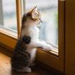 Кот закатил истерику и затеял драку, чтобы его выпустили на улицу. А пользователям Сети не понравилось поведение хозяйки! (ВИДЕО)