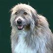Пёс не послушался свою хозяйку, но стал главной звездой выставки (Видео)
