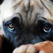 В Бресте мужчина убил свою собаку