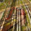 Рост экспорта на четверть: резиденты СЭЗ «Гродноинвест» покоряют зарубежные рынки