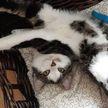 Женщина не могла понять, откуда у неё дома четвертый котенок. Оказалось, что его усыновил кот