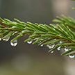 Тепло и сыро: прогноз погоды на 2 января