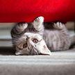 Лист бумаги, точка маркером на нем – и кот завис. Странное поведение питомцев развеселило пользователей Сети (ВИДЕО)