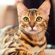 Кошка показала хозяйке, как нужно петь, и рассмешила соцсети (ВИДЕО)