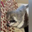 «Кошка Хабиба»: особый «пушистый» захват в бою с собакой заставил хохотать пользователей соцсетей (ВИДЕО)