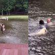 Проверка на верность: мужчина прыгнул на канате в воду, а его собаки тут же ринулись его спасать (ВИДЕО)