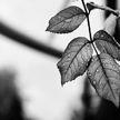 Пропавшая неделю назад 15-летняя брестчанка обнаружена мертвой в лесу
